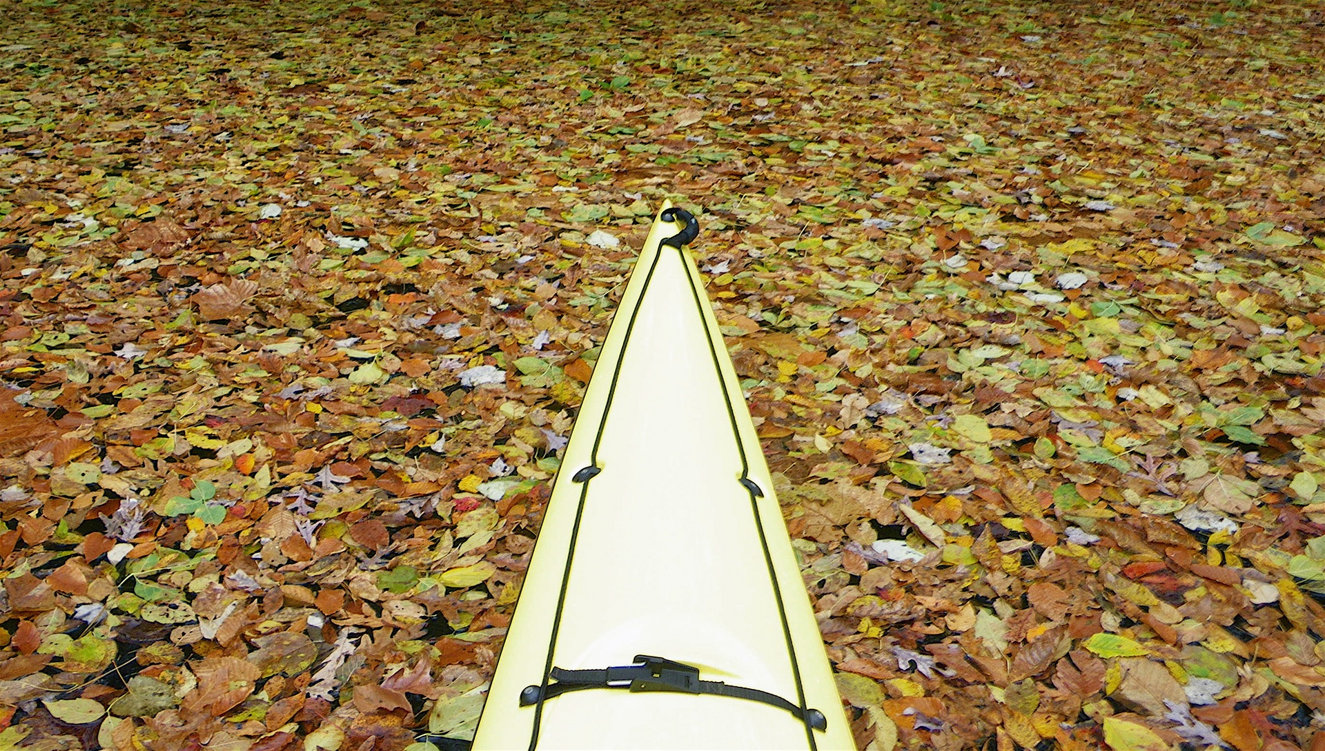 Paddling through leaves - Occoquan Creek